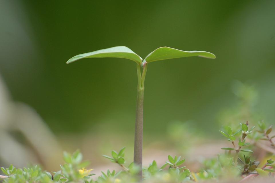 צמיחה – צפייה וצילום