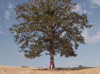 האדם כעץ