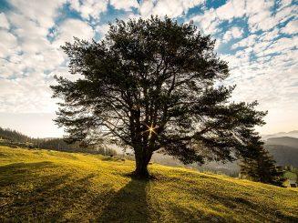 שיעור מהעצים